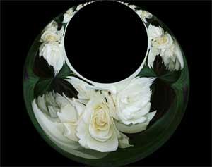 White-Roses-Loop