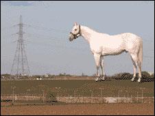 wallinger-horse