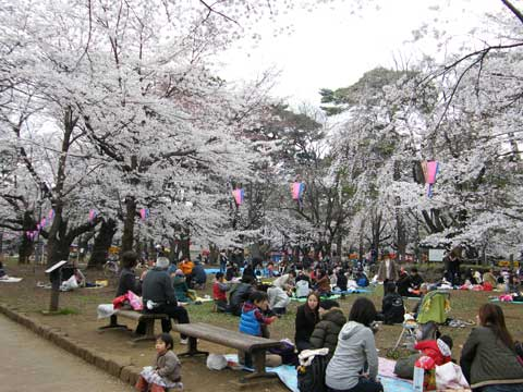 cherry-blossom-party-1