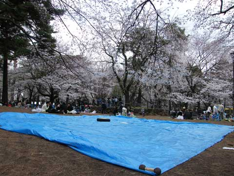 cherry-blossom-party-2