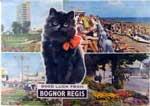 sacha-waldron-postcards-2