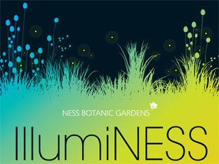 IllumiNess-Image