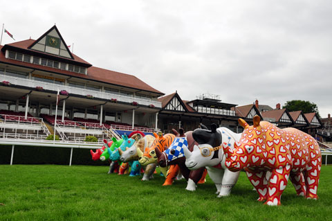 A few rhinos line up for the races at Chester Racecourse