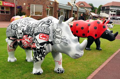 rhinos-5