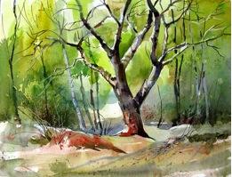 Williamson: Watercolour Classes
