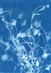 the Bluecoat: Intro to Cyanotypes (Blueprints)