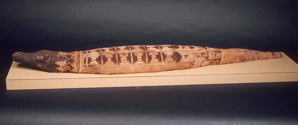 Mummified crocodile at World Museum