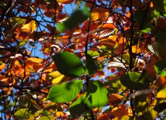 Leaves of Summer by Colin Serjent