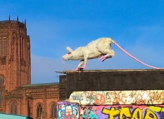 Super Rat by Faith Bebbington, Liverpool