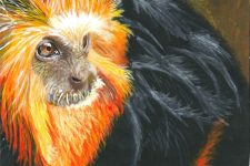Golden Tamarin by Nyah Boorman. dot-art Schools at St George's Hall 2016
