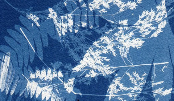 Bluecoat Display Centre: Cyanotypes workshop with Sian Hughes