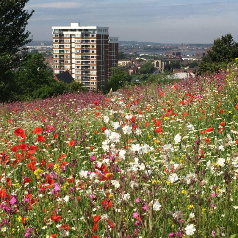 Everton Park: Wildflower Gathering