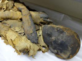 LightNight 2018: Garstang Museum: Bringing Mummification to Life