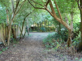 IB18: Fulwood Community Gardens: Not Just Collective