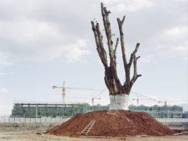 Look Photo Biennial: Outdoor Exhibition: Yan Wang Preston - Forest