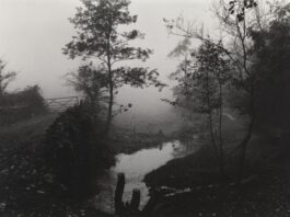 Tate Liverpool: OnlineSolar LandscapesCyanotype printmaking Course