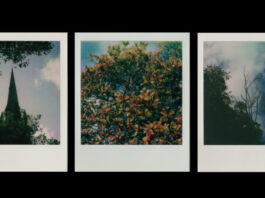 LightNight: Online: PORTRAIT OF AN ORDINARY TREE